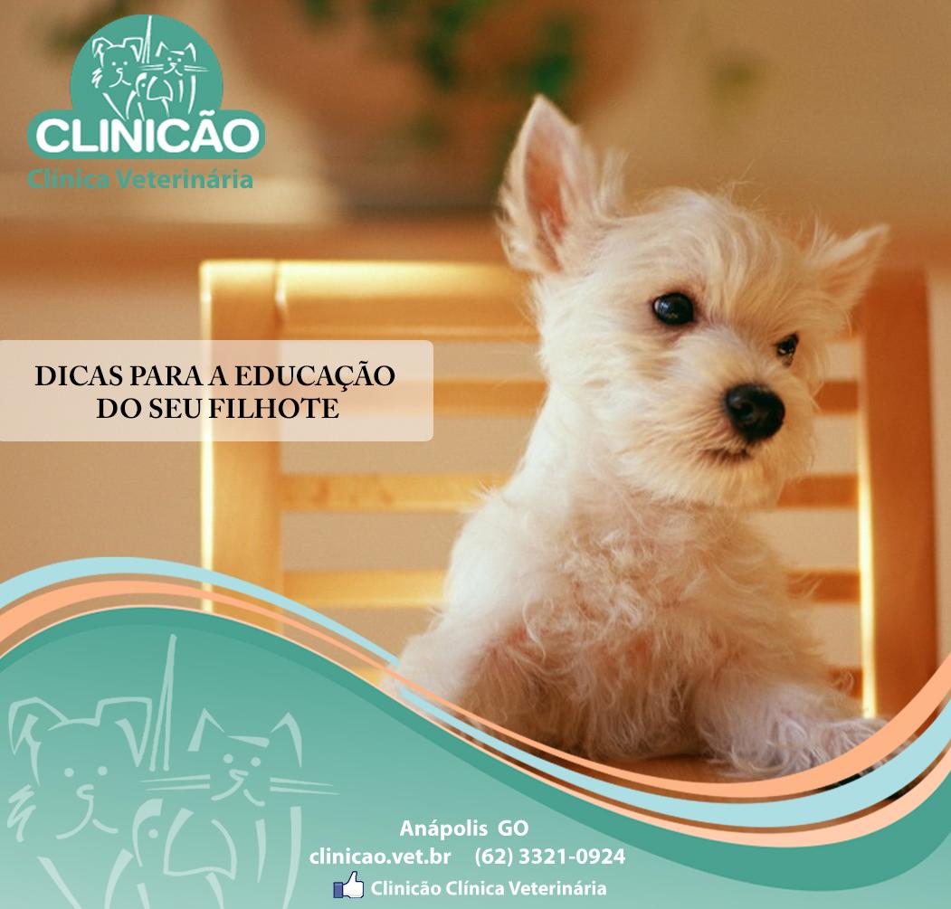 DICAS PARA EDUCAÇAO FILHOTE